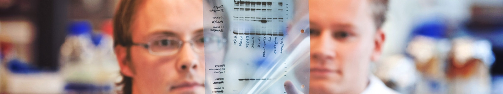 Masterstudents Infection and Immunity analysing lab results