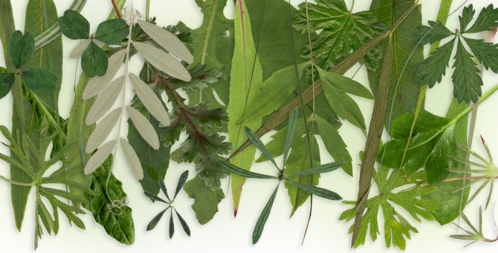 Using leaf traits as barometers