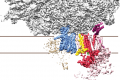 Three-dimensional structure of the OST-containing ribosome-translocon complex