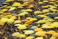 CfGC parapluprotest