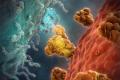 Computeranimatie van een coronavirus. Het coronavirus, rood, dringt hier binnen in de gastheercel, blauw. Hiervoor bindt het oranje eiwit zich aan het blauwe molecuul op het oppervlak van de gastheercel. Dit is de eerste stap in de infectie.