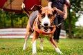 Hond met tak in zijn bek speelt in het park