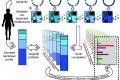 Schematische beschrijving van het model voor de bepaling van het metabolieten-milieu op basis van de aanwezige bacteriën