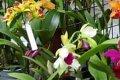 Orchideeendag