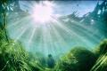 zeegras op de zeebodem met zonneschijn