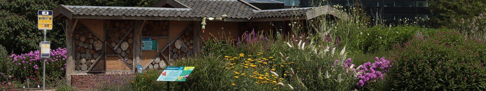 Diertjestuin met wand voor solitaire bijen