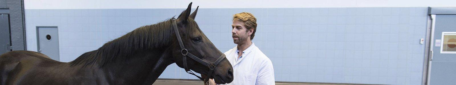 Universiteitskliniek Paard