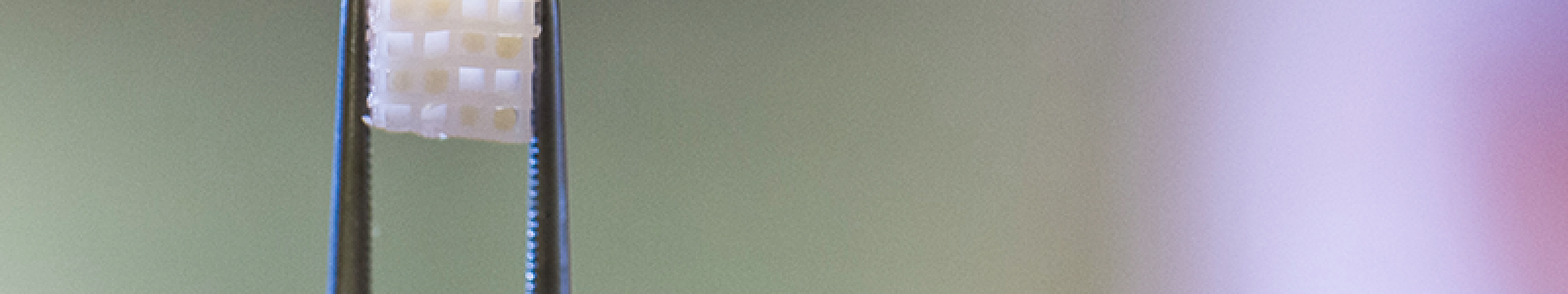Onderzoeker toont gekweekt weefsel in pincet.