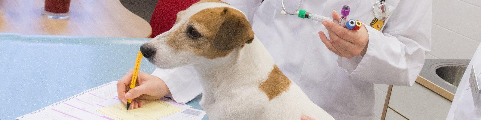 Veterinaire services en samenwerking, diergeneeskunde
