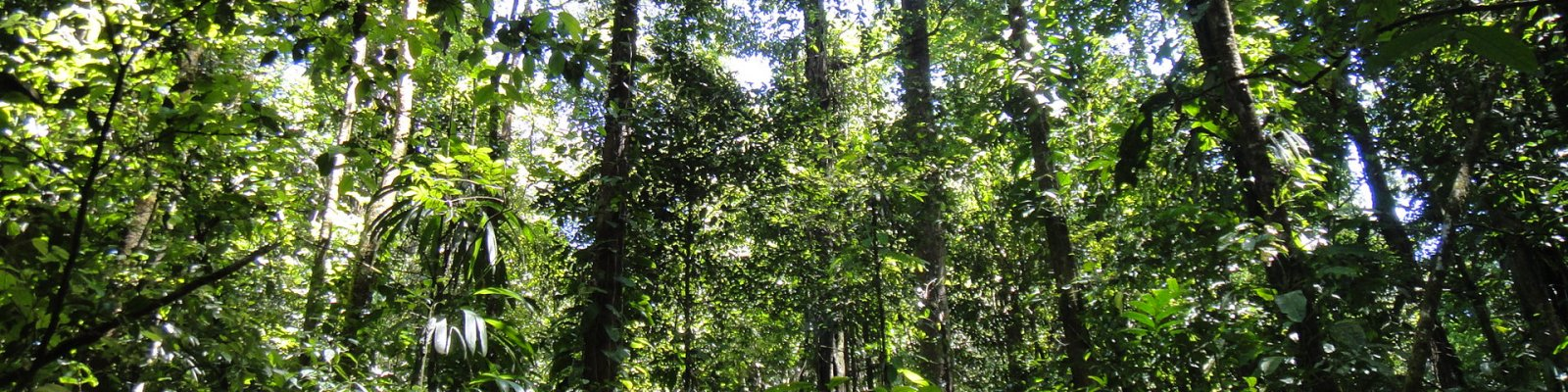 Tropical forest management and conservation