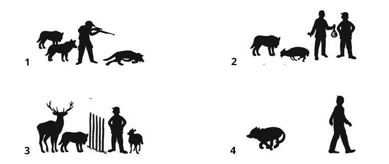 Strategieën om met de wolf om te gaan