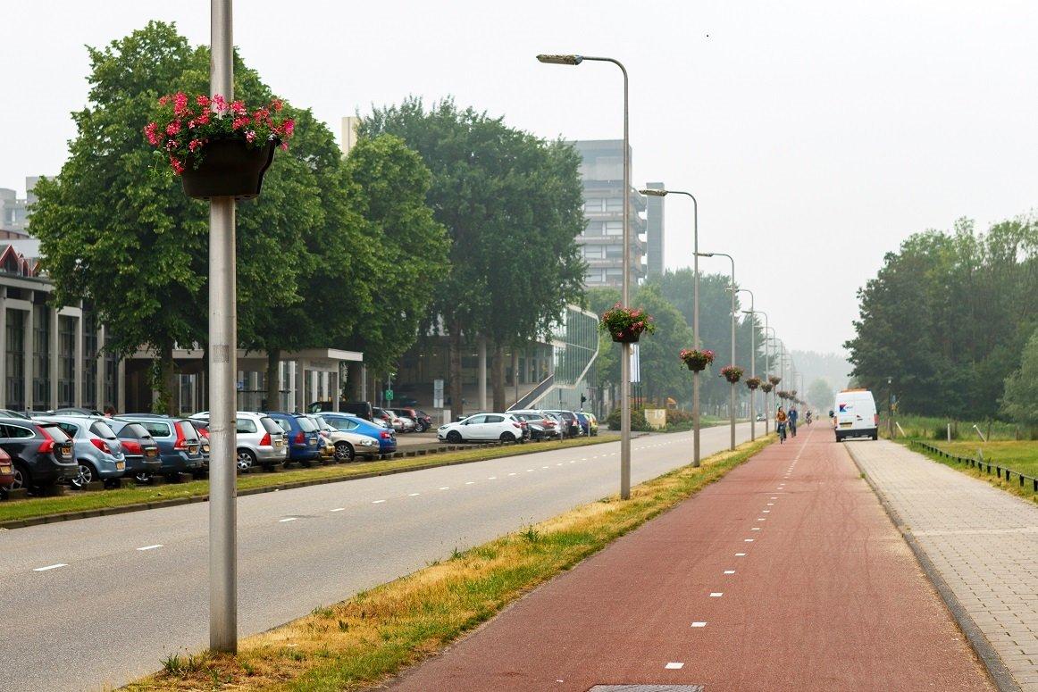 Bloemen op Utrecht Science Park De Uithof