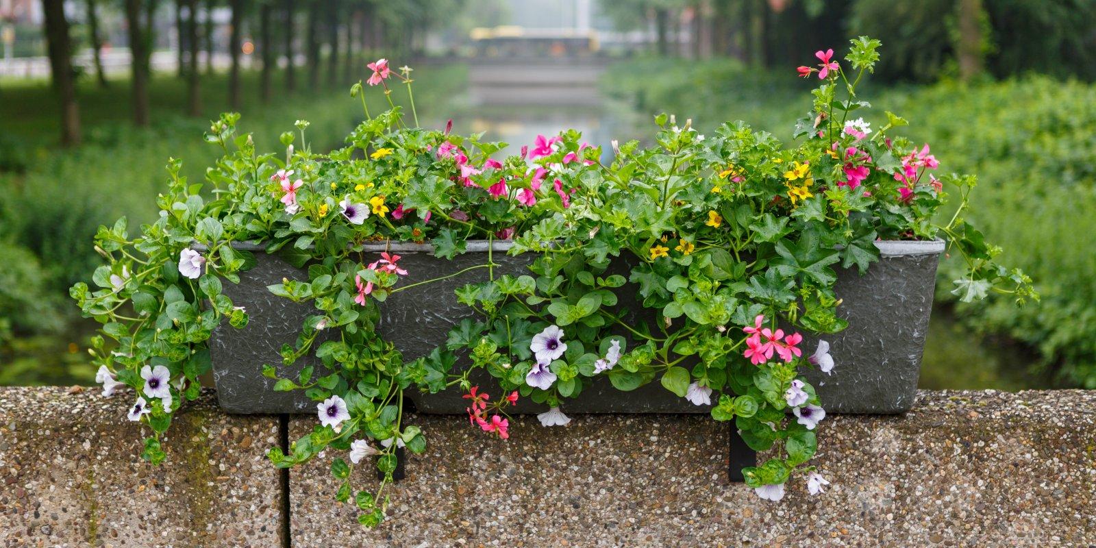 Bloemen in Utrecht Science Park De Uithof