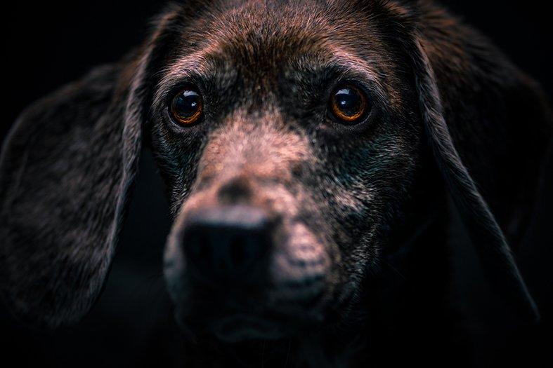 Portret van het gezicht van hondpatient Aagje