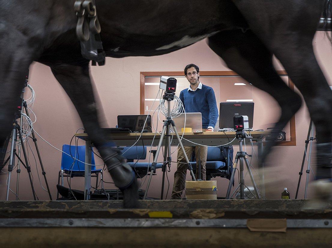 Een paard met sensoren aan de benen loopt voor onderzoek over een loopband.