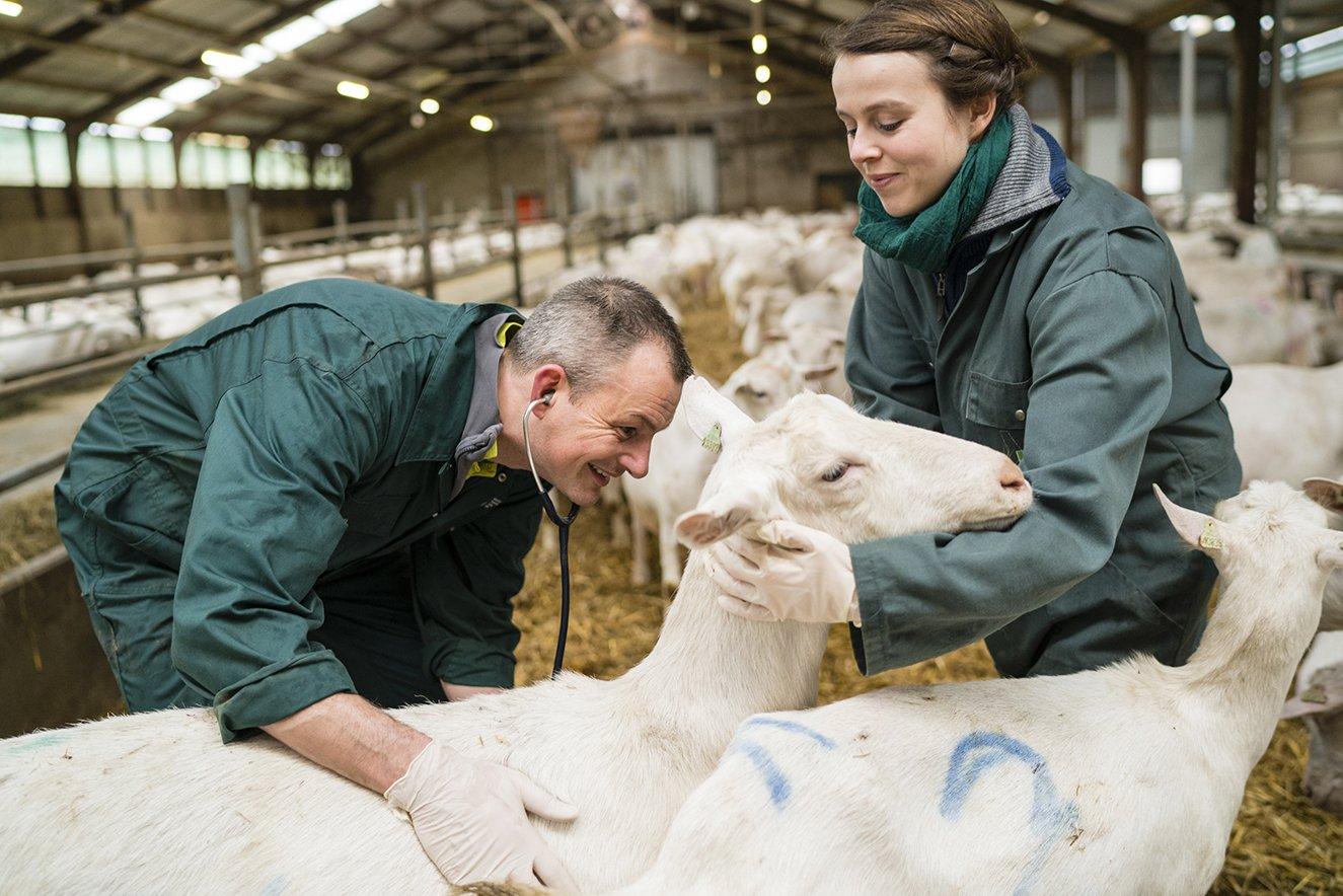 Universitaire Landbouwhuisdieren Praktijk