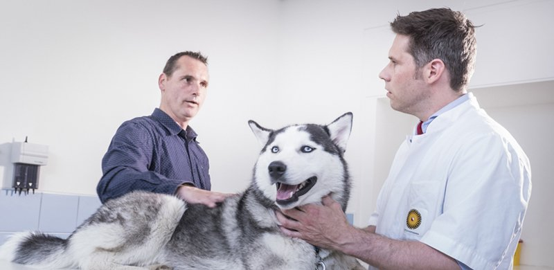 UU Kankercentrum voor Dieren