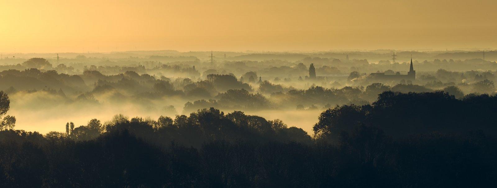 Utrechtse Heuvelrug in ochtend. Foto: Dykam, via Unsplash