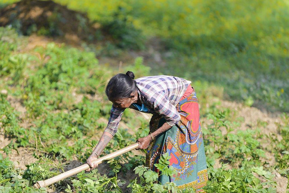 Nepalese vrouw verbouwt groenten. Credits: IgorChus via iStock.