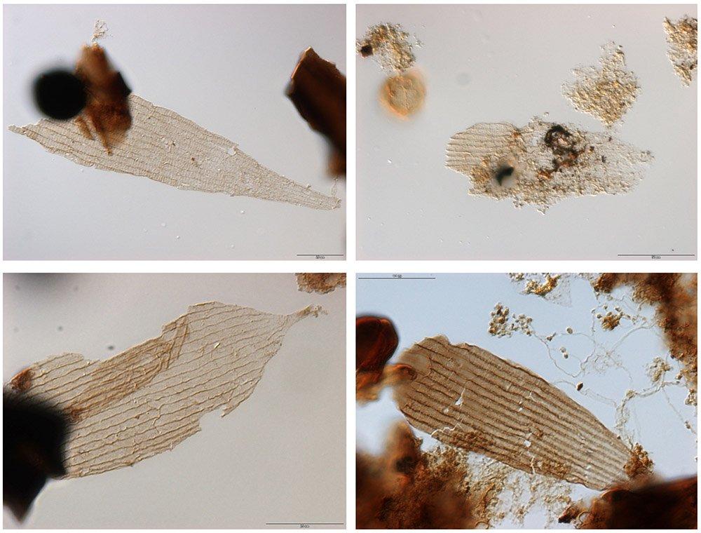 Fossiele vleugels