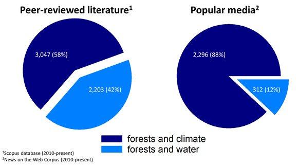 In de wetenschappelijke literatuur wordt ongeveer evenveel aandacht besteedt aan bosbeheer vs. klimaat en bosbeheer vs. watermanagement. Maar in populaire media zijn de verhoudingen volledig anders. Beeld: Jaivime Evaristo