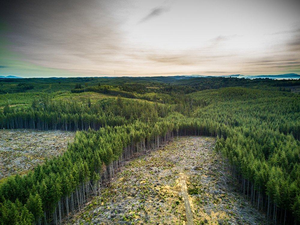 Ontbossing in beheerde bossen in Washington (VS). Foto via iStock/halbergman