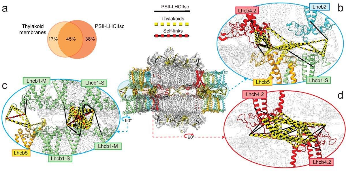 The molecular machinery inside a chloroplast