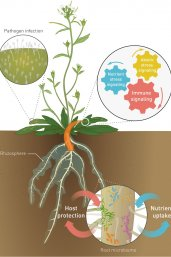 Soil-Borne Legacies - Management of the Root Microbiome