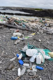 Galapagos coast with plastic waste (photo:  Galapagos Conservation Trust - Andy Donnelly)n)