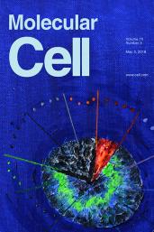 Cover van Molecular Cell met illustratie van het onderzoek van Stefan Rüdiger c.s.
