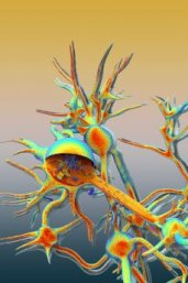 Artist impression of transport in a neuron (NastPlas TM)