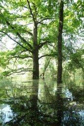 Biodiversiteit in de uiterwaarden