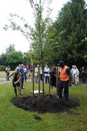 De wethouder Baarn en voorzitter van Stichting Vrienden van het Cantonspark planten een iep.