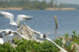 UCWOSL - vogels op de Grutte Krite