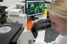 Bachelor Molecular Life Sciences