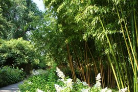 Bamboo bushes
