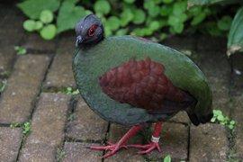 Roul-rouls zorgen in de Tropische kas voor ongediertebestrijding