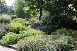 Vasteplantenborder aan de rand van de Systeemtuin