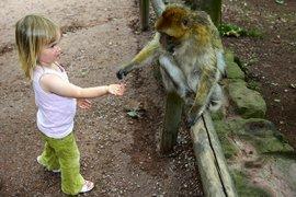Groepsgedrag bij kinderen en apen