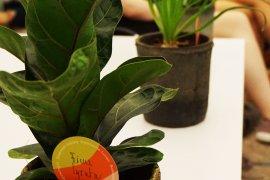 Move a Plant