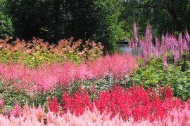 Botanic Gardens in bloom