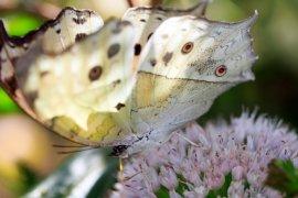 Butterfly in Botanic Gardens