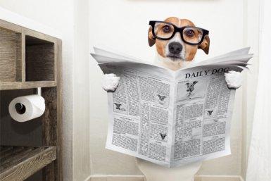 Dog reading newspaper on toilet