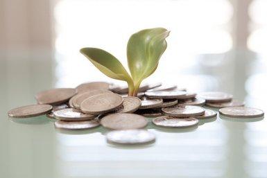Seed Money. Foto: Tax Credits