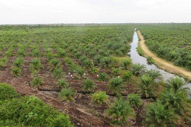 Palm Oil Plant