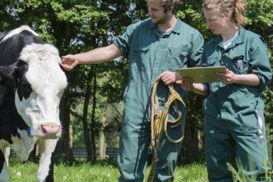 Onderzoekers in wei met koeien Diergeneeskunde