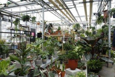 Adopt a Plant Green Office Utrecht Botanic Gardens