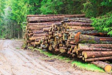 Stapel omgehakte boomstammen naast bosweg