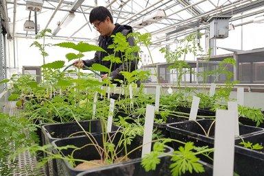 Millenium Ginseng Project van Kuang-Yi Ku