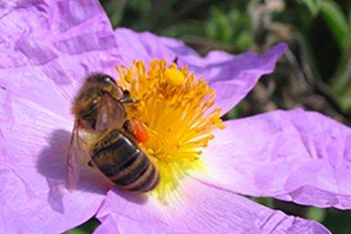 BIjendag botanische tuinen